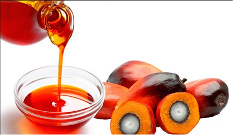 Palm Oil changes chromosomes and DNA