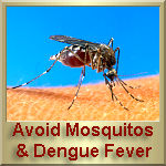 Avoid mosquitoes, they spread the Dengue Fever